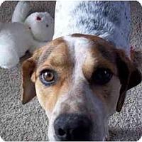 Adopt A Pet :: Hunter - Milwaukee, WI