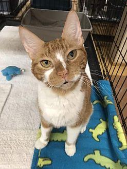 Adopt A Pet :: Rusty  - Blasdell, NY