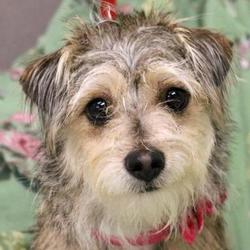 Wenatchee Valley Humane Society in Wenatchee, Washington