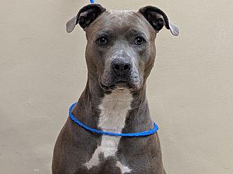Adopt A Pet :: 19-0591  - Laramie, WY