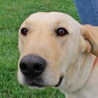 Adopt A Pet :: Alastair - LaHarpe, KS