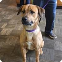 Adopt A Pet :: Chief - Seattle, WA