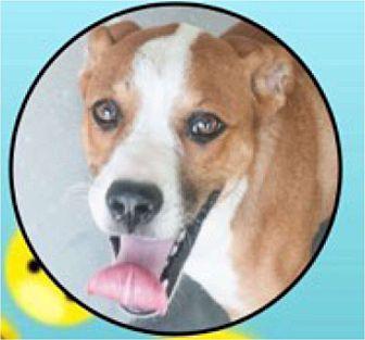Adopt A Pet :: Happy  - Windsor, NC
