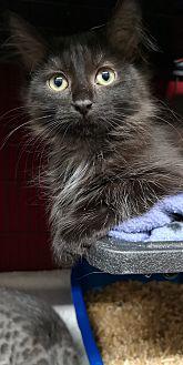 Adopt A Pet :: Jazz  - Moose Jaw, SK