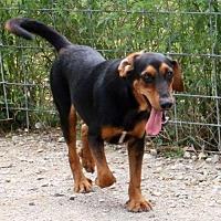 Unconditional Love Pet Rescue, Saratoga NY Extension* in