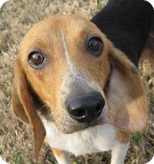 Huntsville Alabama Dog Adoption