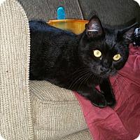 Adopt A Pet :: Bernice - Madera, CA