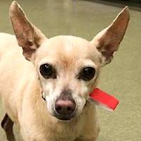 Adopt A Pet :: Lani - Marina del Rey, CA