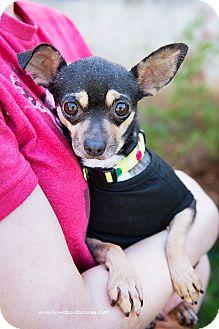 "Chihuahua Dog for adoption in Atlanta, Georgia - Magdalene ""Maggie"""