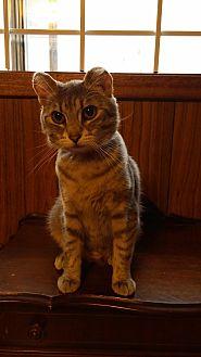 Adopt A Pet :: Tipkins  - Edmonton, AB