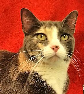 Adopt A Pet :: River  - Edmond, OK