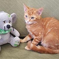 Adopt A Pet :: Jerry - Saint Robert, MO