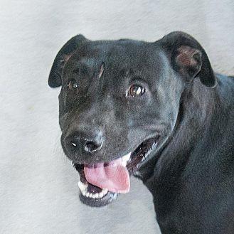 Adopt A Pet :: Bear  - Windsor, NC