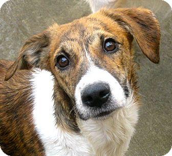 Chicago Pet Adoption Dogs