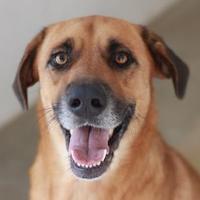 Adopt A Pet :: ROSCO - Kyle, TX