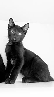 Adopt A Pet :: Libby  - Germantown, TN