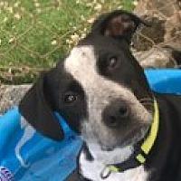 Joyful Pets Animal Rescue in Amherst, Massachusetts
