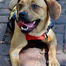 Adopt A Pet :: JuJu (Has Application)