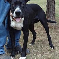 Adopt A Pet :: Blues - Jefferson, TX