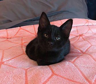 Adopt A Pet :: Quinn  - Concord, NC