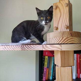 Adopt A Pet :: Loko  - BROOKLYN, NY