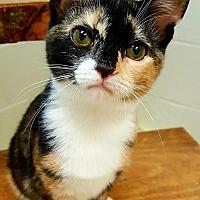 Adopt A Pet :: Gypsy - Huntsville, AL