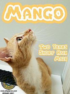 Adopt A Pet :: Mango  - Nicholasville, KY