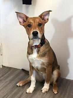 Adopt A Pet :: Franny  - Moose Jaw, SK