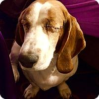 Adopt A Pet :: Nya:loves petting! (PA) - Madison, WI