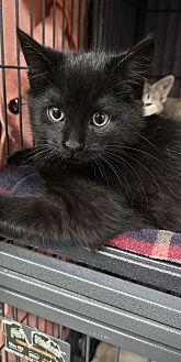 Adopt A Pet :: Beetlejuice  - Moose Jaw, SK