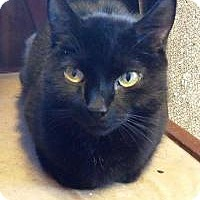 Adopt A Pet :: Prancer - Putnam, CT