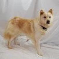 Adopt A Pet :: Liz - Jackson, MS