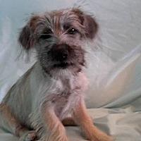 Adopt A Pet :: Kathie - Snyder, TX