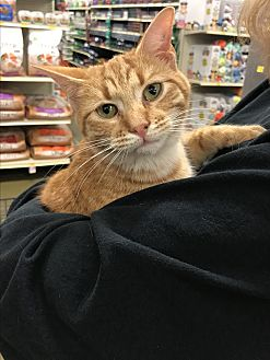 Adopt A Pet :: Tiger  - Snow Hill, NC