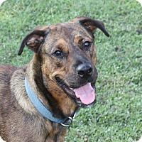 Adopt A Pet :: Zena - Marion, AR