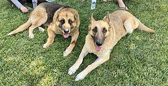 Bella & Junior Photo #4