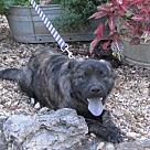Adopt A Pet :: Mazy