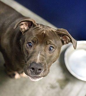 Adopt A Pet :: Kali  - Henderson, NC