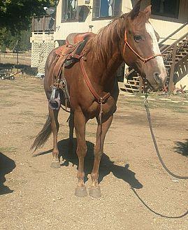 Adopt A Pet :: Tilia  - Greenville, CA