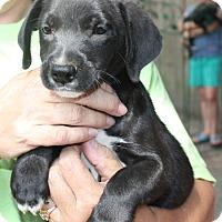 Adopt A Pet :: Raylen - Marion, AR