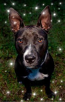 Adopt A Pet :: Morgan  - Oklahoma City, OK