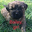 Adopt A Pet :: Bailey RBF