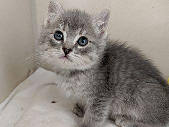 Adopt A Pet :: Stevie  - Laramie, WY