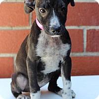 Adopt A Pet :: Crispy - Waldorf, MD