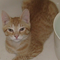 Available pets at Pulaski County Humane Society in Somerset