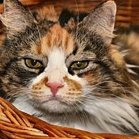 Adopt A Pet :: Casie - Alexandria, VA