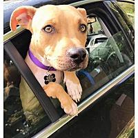 Adopt A Pet :: Mia - Sharon Center, OH