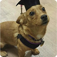 Adopt A Pet :: Minnie - Tucson, AZ