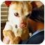 Photo 1 - Chihuahua Mix Dog for adoption in Encino, California - PEPE