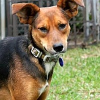 Adopt A Pet :: DAISY-14 Hollywood, FL - Lithia, FL